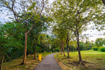 Pathway and tree on beautiful green city park