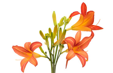 flower orange lily (beautiful isolated lilies) bouquet of lilies