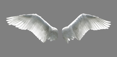 Angel wings isolated on gray background