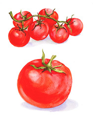 Tomatoes watercolor illustration.