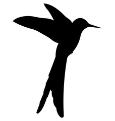 Colibri Birds Silhouettes Vector EPS 10