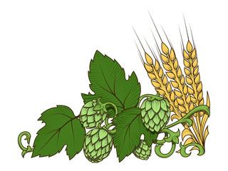 Hops and barley ornament vector illustration