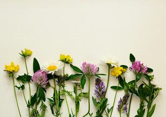 Closeup of wild flowers line