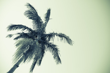 Palm tree against sky monochrome faded old image style