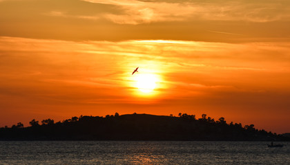 Seagull flying at sunset, silhouette. Sunset on the sea.