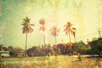 Tropical Background Wild Thailand Palm Trees Shabby Effect