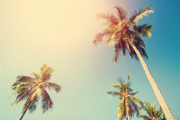 Tropical Background Palm Trees Sun Light Holiday
