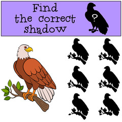 Children games: Find the correct shadow. Cute bald eagle sits on the tree branch
