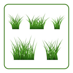 Green grass bushes set. Nature plant background. Collection silhouettes isolated on white. Symbol of field, lawn, spring and meadow, fresh, summer. Elements for design environment. Vector illustration
