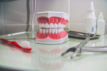 teeth layout for the dentist with a toothbrush. still life on the subject of dentistry and stomatology, 