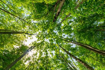 Sonnenstrahlen brechen durch Baumkronen im Wald
