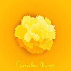 Vector flower of Carnation