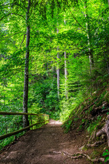 narrow forest path with small wooden fence and sprouted roots