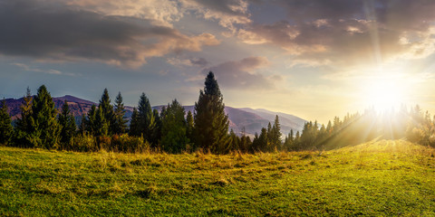 spruce forest on hillside at sunset