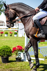 Equestrian Sports, Horse Jumping, Horse Racing themed photo, portrait orientation