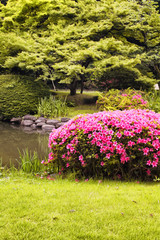View of artificial lake and azalea in Shinjuku garden in Tokyo