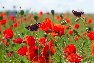 Бабочки на прогулке