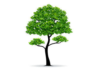 tree and leaf