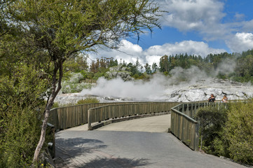 Whakarewarewa Geyser at Te Puia thermal park in geothermal valley of Rotorua, New Zealand