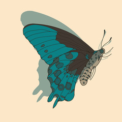 a side face butterfly illustration in blue and brown shades