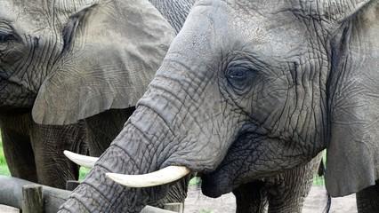Gelungener Artenschutz der Elefanten