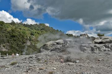 Whakarewarewa Geyser at Te Puia thermal park in geothermal valley of Rotorua, New Zealand