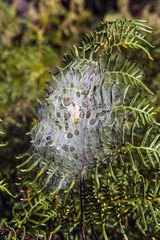 Spider net covers fern leaves in the forest of New Zealand