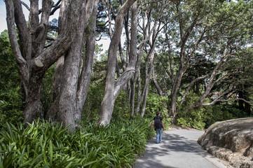 Wellington, New Zealand - March 2, 2016: Visitor walking in Wellington Botanic Garden