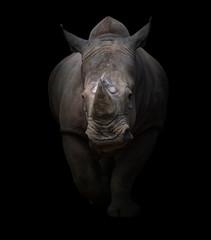 white rhinoceros in dark background