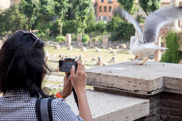 Woman photographing sea gull on background  Roman Forum