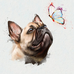 French bulldog with butterfly on nose, close up on white background, with elements of spray paint