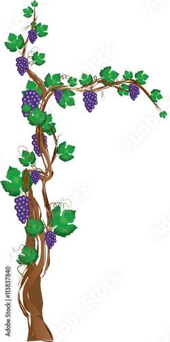 christian cross with tree and grape vine