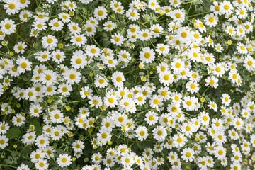 Cerca immagini piccoli fiori - Settembrini fiori ...