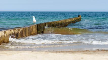 Buhne am Meer mit Möwe