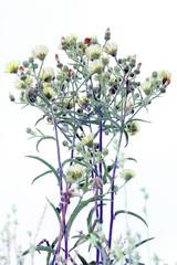 Florecillas herbáceas con fondo quemado