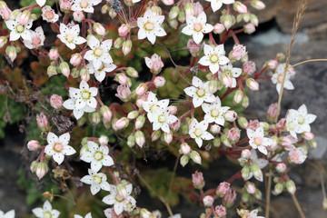 Florecillaa silvestres de pared