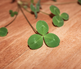 The green leaves of clover.