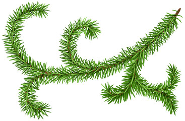 Decoration fir branch for Christmas wreath. Green pine branch isolated