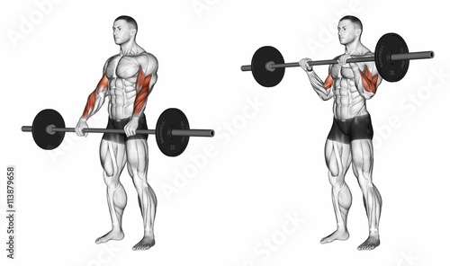 Reverse Barbell Curls The reverse barbell curl work both the biceps and forearm extensor muscles Grip a barbell with a shoulder width overhand grip