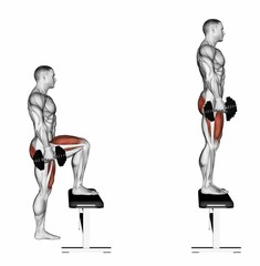 Pacing with dumbbells on bench. Exercising for bodybuilding. Target muscles are marked in red. Initial and final steps. 3D illustration