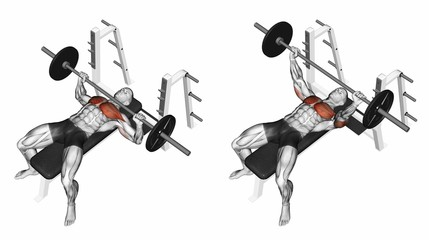 Press of a bar, lying on the bench. Exercising for bodybuilding. Target muscles are marked in red. Initial and final steps. 3D illustration
