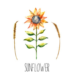 Watercolor sunflower and spica.