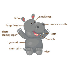 Illustration of hippo vocabulary part of body
