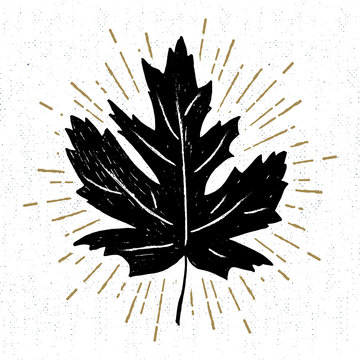 Hand drawn icon with a textured maple leaf vector illustration.