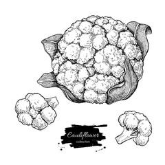 Cauliflower hand drawn vector illustration. Vegetable engraved s