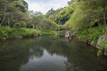 View of Cheonjiyeon River and verdant trees near Cheonjiyeon Falls on Jeju Island in South Korea.