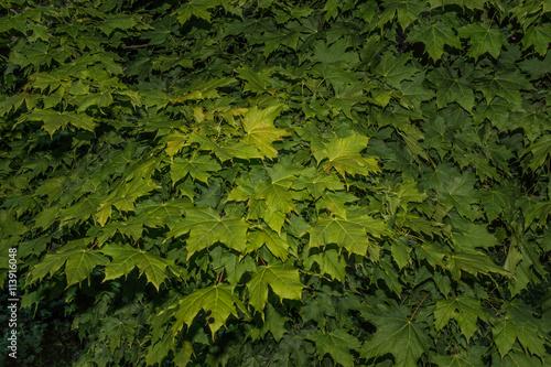 Blätter - Hintergrund