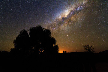 A small tree in front of the awesome milky way in Isalo, Madagascar