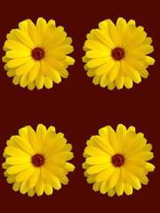 Abstract British Garden Flower Scene England