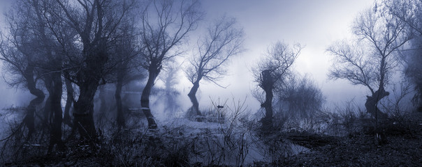 Poster Landscapes Creepy landscape showing misty dark swamp in autumn.
